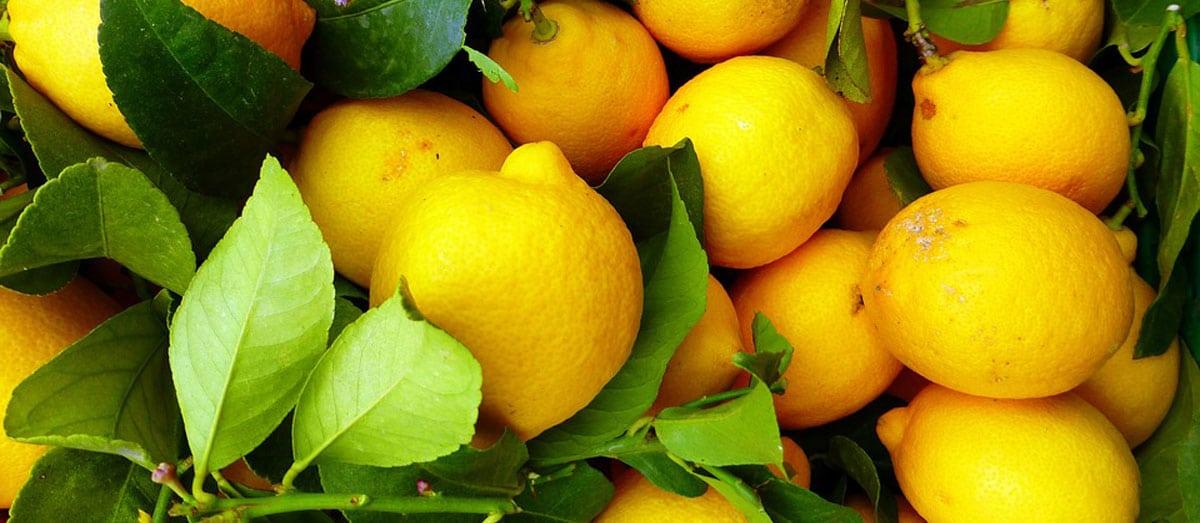 Jus Citron Perte De Poids Mythe Realite Conseils